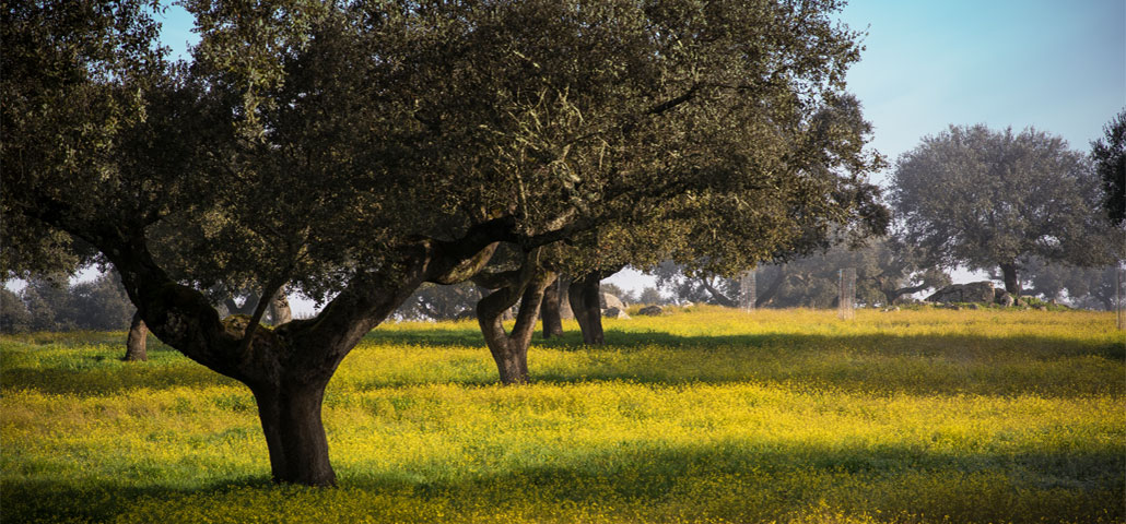 La Dehesa de Extremadura: cuna del cerdo ibérico de bellota